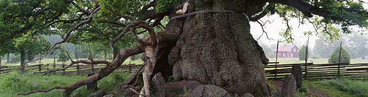 Veteran Tree Surveys
