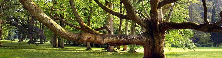 Tree Safety Management Strategies