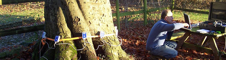 Tree Stability Assessment