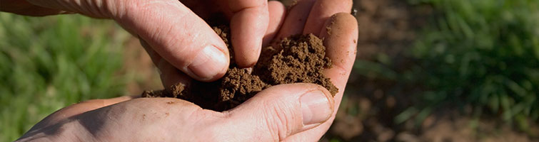 soil testing hand holding