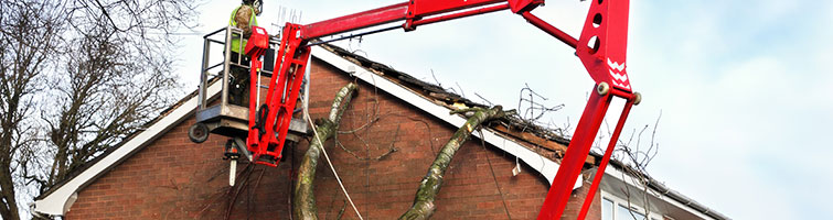Structural Damage & Subsidence Tree Reports