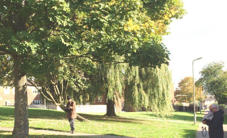 Treework Tree Survey Aldwyck