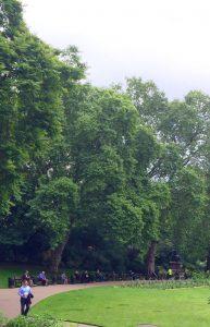 160623_Park in London (2)