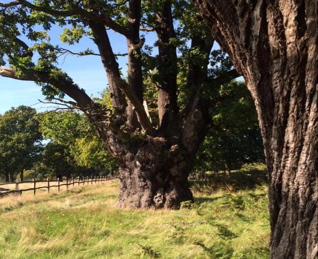 Richmond Park Veteran Trees