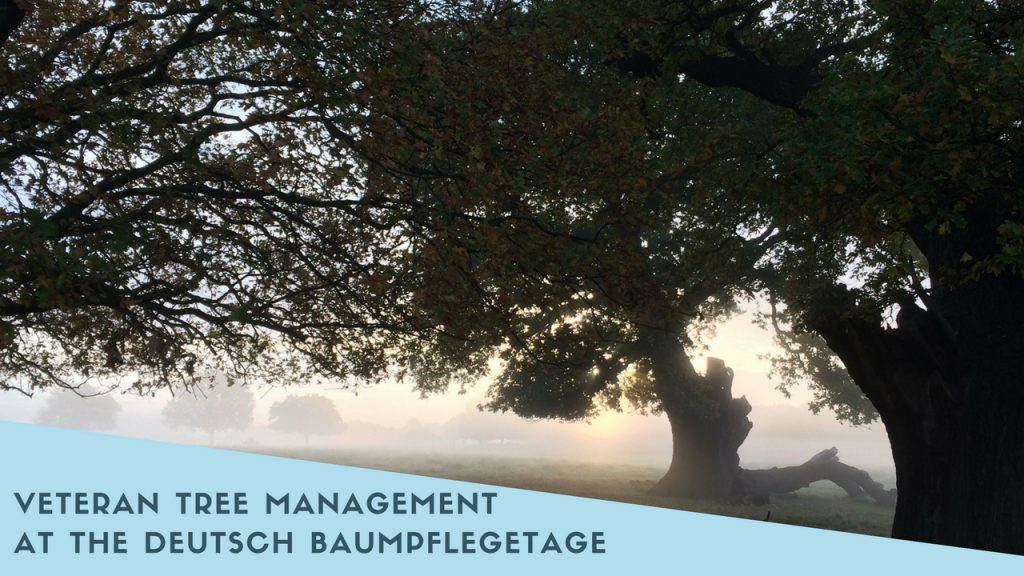 Veteran Tree Management At The Deutsch Baumpflegetage