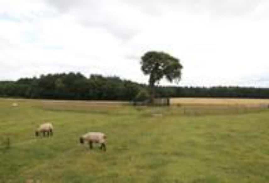 Conservation Arboriculture